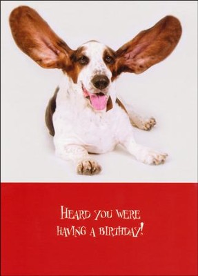 Paws for Celebration Birthday Cards, Box of 12   -     By: Pam Marks
