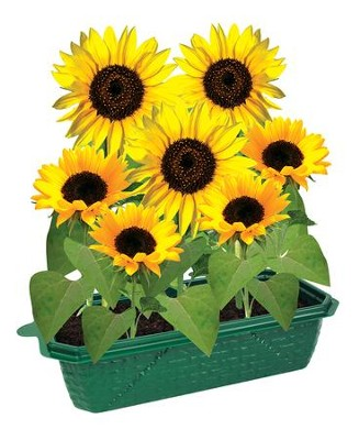 Grow Your Own Sunflowers  -