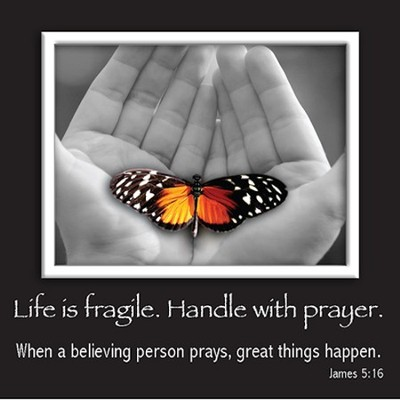 Picture Magnet, Butterfly, James 5:16  -