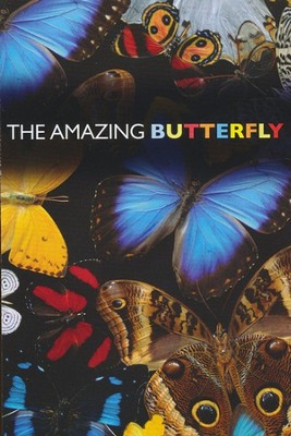 Amazing Butterfly, Pack of 25 Tracts  -