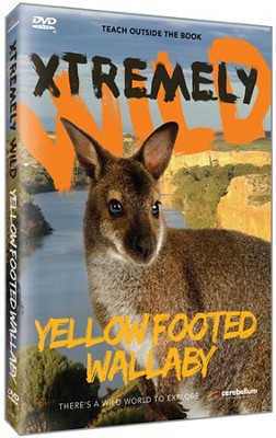 Yellow Footed Wallaby DVD  -
