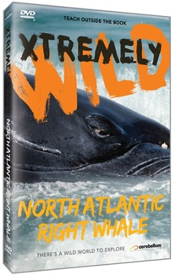 Xtremely Wild: North Atlantic Right Whale DVD   -