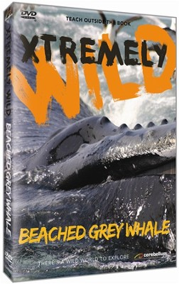 Xtremely Wild: Beached Grey Whale DVD   -