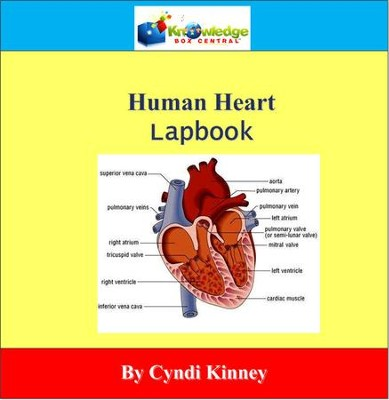 Human Heart Lapbook - PDF Download  [Download] -     By: Cyndi Kinney