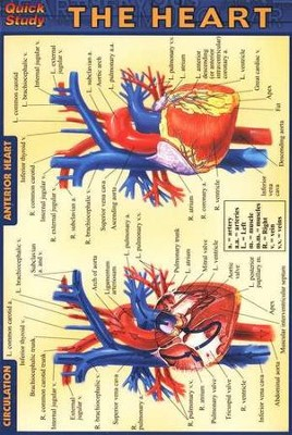 Heart, QuickStudy &#174 Pocket Guide     -