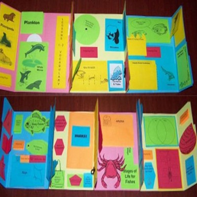 Exploring Creation with Zoology 2: Swimming Creatures of the 5th Day Lessons 1-13 Lapbook Package (Assembled)  -     By: Cyndi Kinney