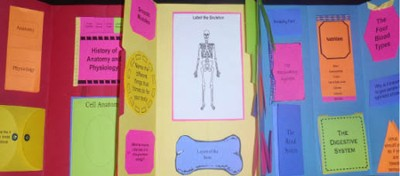 Apologia Exploring Creation with Human Anatomy & Physiology  Lapbook Lessons 1-7 (Assembled Edition)  -     By: Cyndi Kinney