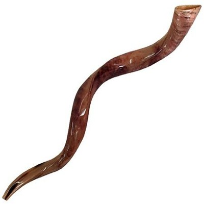 Yemenite Shofar, 48 - 51 In.   -