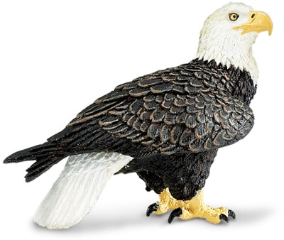 Wild Safari Forest: Bald Eagle   -