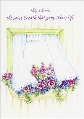 Get Well Window on Healing Greeting Cards, Box of 12  -
