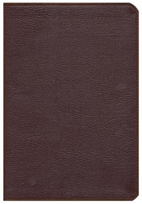 NIV Thinline Zippered Collection Bible, Large Print, Burgundy  -