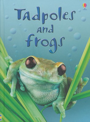 Tadpoles and Frogs   -