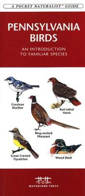 Pennsylvania Birds   -