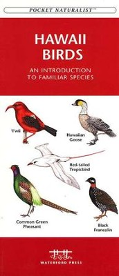 Hawaii Birds   -
