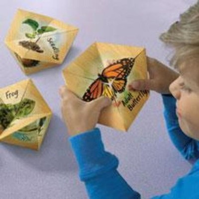 Lifecyclers: Butterfly, Frog, and Plant   -