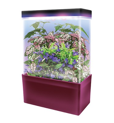 Tropical Jungle, LED Light Cube Terrarium  -