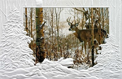 Lone Buck, Live In Harmony and Peace Cards, Box of 16  -     By: Don Kloetzke