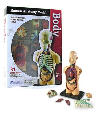 Human Body Anatomy Model   -