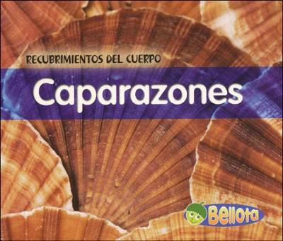 Caparazones, Shells  -     By: Cassie Mayer