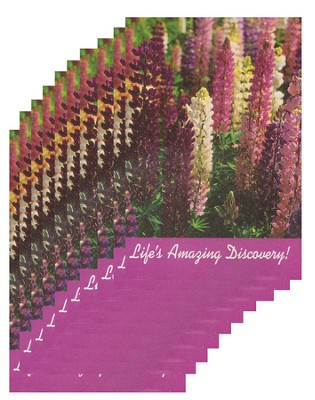 Life's Amazing Discovery - pamphlet - pack of 10   -     By: Stonecroft Ministries