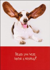 Paws for Celebration Birthday Cards, Box of 12
