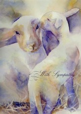 Hope and Comfort Sympathy Cards, Box of 12
