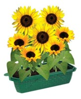 Grow Your Own Sunflowers
