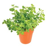 Tasty Herb Capsules, Oregano
