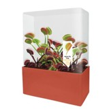 Fly Traps Plant Cubes