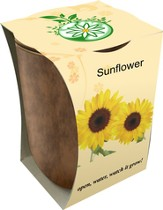 Bamboo Fiber Jar, Indoor/Outdoor Grow Kit, Sunflower