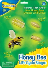 Bee Life Cycle Stages Figurines