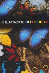 Amazing Butterfly, Pack of 25 Tracts