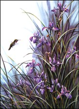 Wild Garden Hummingbird Thank You Notes, Box of 15