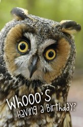 Whooo's Having a Birthday Postcards (Psalm 118:24, NIV) pack of 25