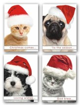 Christmas Paws, Box of 12 Assorted Christmas Cards (NIV)
