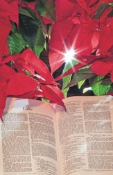 Poinsettia with Bible, Pack of 100 Bulletins
