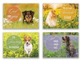 Just Fur Fun , Box of 12 Assorted Encouragement Cards (NIV)