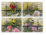 Backyard Beauties Sympathy Cards, Box of 12