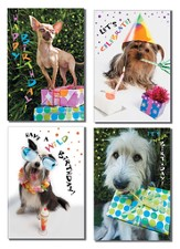 Dogs Design Birthday Cards, Box of 12