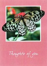 Butterfly Squares Thinking of You Cards, Box of 12
