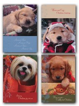Cuddly Christmas Cards, 12 Count