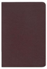 KJV Zondervan Study Bible, Bonded leather, Burgundy