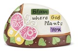 Bloom Where God Plants You Rock