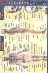 Skeletal System, QuickStudy ® Pocket Guide