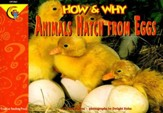 How & Why Animals Hatch From Eggs Grades 1-3