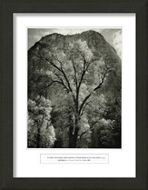 O Lord, Our Lord, Autumn Tree, Framed Art