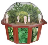 Herb Garden, Edible Dome Terrarium