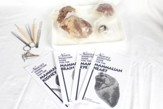 Mammal Organs Dissection Kit