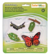 Safariology, The Life Cycle of a Monarch Butterfly