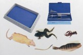 BJU Press Biology Dissection Lab Kit with Specimens